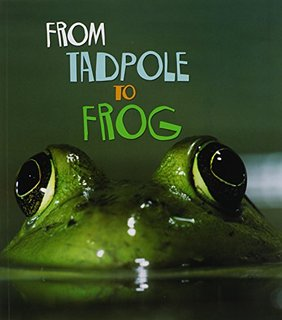 from tadpole to frog.jpg