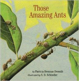 those amazing ants.jpg