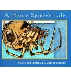a house spider's life.jpg