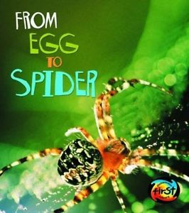 from egg to spider.JPG